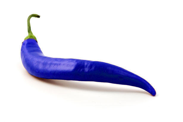 Logo Blue Chilli